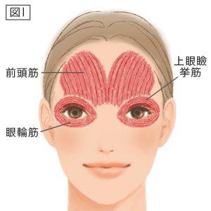 目の周りのコリとおでこの筋肉はこんな感じで張り付いてます。